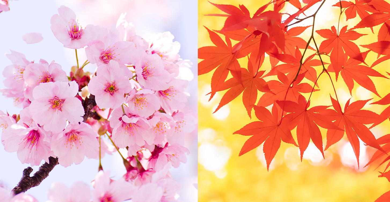 金運アップ財布購入は春と秋
